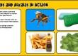 acids alkalis